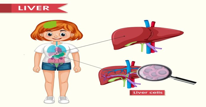 4D Ultrasound Tracking of Liver and its Verification for TIPS Guidance