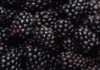 Expansion of Blackberry in retail market through retail auditing, marketing, research and survey