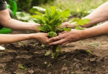 Farmer Welfare management System