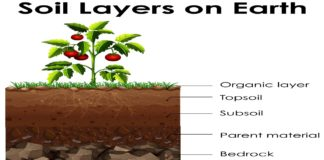 Behaviour Of Lateral Resistance Of Flexible Piles In Layered Soils
